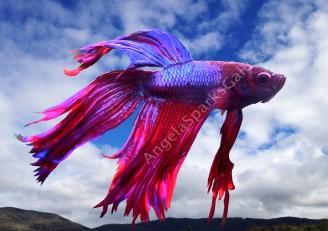 My Rainbow Fantasy