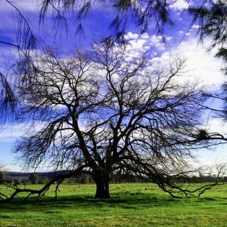 Mystical Tree; Enquiries Welcome