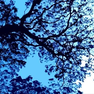 Jacaranda Sky's; Enquiries Welcome